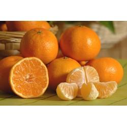 Mandarine Ortanique (500gr)