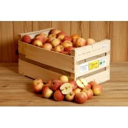 Pommes royal gala  (le kg)